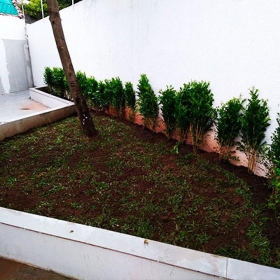 Empresa de Paisagismo Jardim Pequeno Alto da Lapa - Projeto Paisagismo