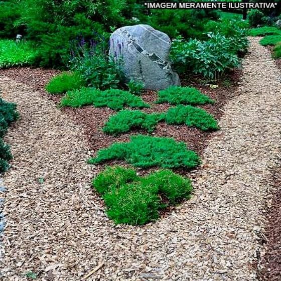 Paisagismo com Pedras Itaim Bibi - Paisagismo com Pedras