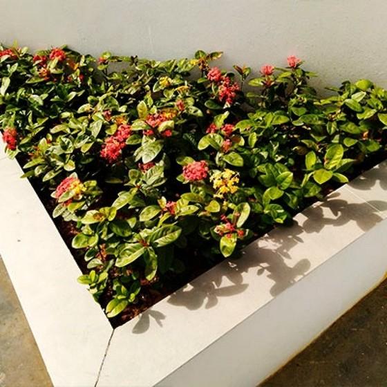 Serviço de Paisagismo Jardim Pequeno Bairro do Limão - Projeto Paisagismo