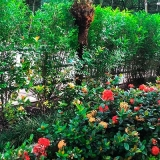 jardinagens para empresa Chácara Inglesa