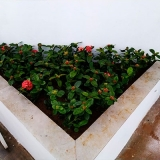 onde encontrar serviços de jardinagem Vila Boaçava